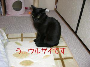 Neko16_32_1