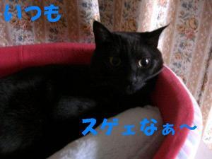Neko18_21