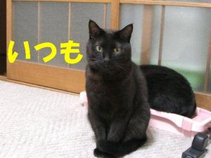 Neko18_30_1