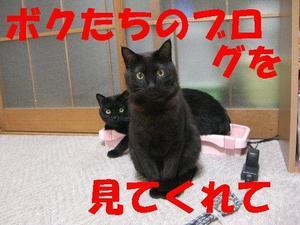 Neko18_31_1