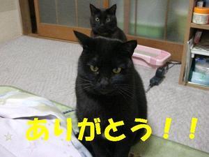 Neko18_32_1