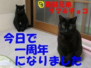 Neko18_33_1