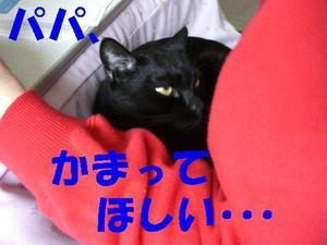 Neko18_63