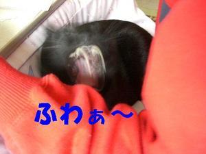 Neko18_65