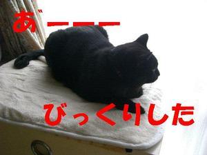 Neko18_170