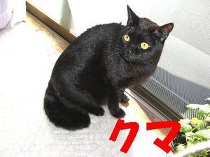 Neko18_207