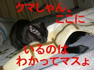 Neko20_63