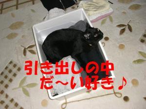 Neko23_29