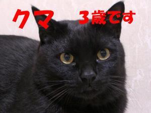 Neko23_126