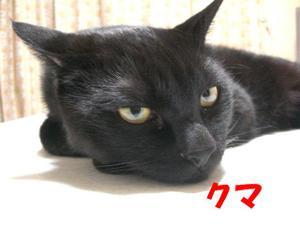 Neko25_23