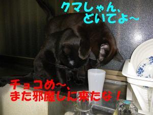 Neko31_9_1
