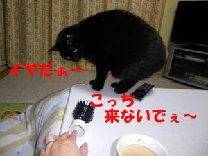 Neko30_42_1