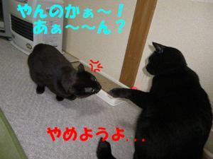 Neko31_12_1