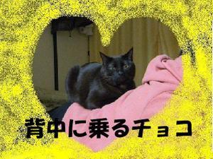 Neko29_16_1_2