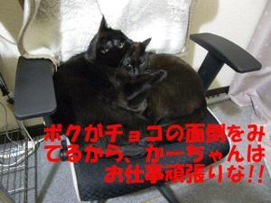 Neko30_14_1