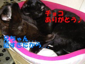 Neko33_112_1