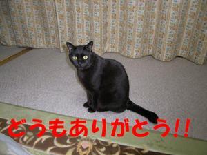 Neko31_3_1