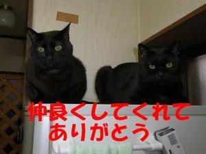 Neko30_78_1