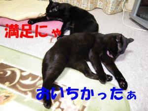 Neko34_61_1