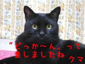Neko35_126_1