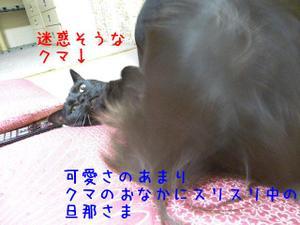 Neko35_83_1