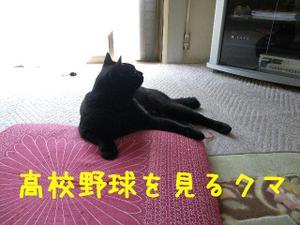 Neko36_2
