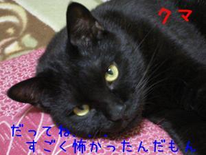 Neko36_36_1
