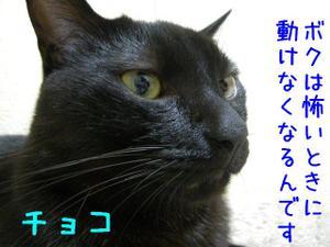 Neko36_76_1