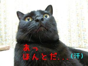 Neko36_11_1_2