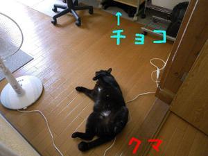 Neko36_96