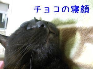 Neko36_136_1
