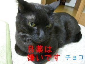 Neko37_50_1