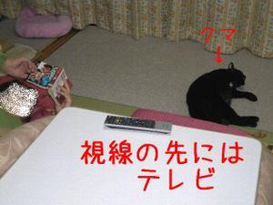 Neko37_71_1